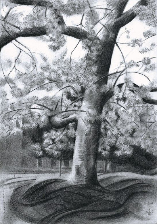 The promise of spring - 01-05-16 (for sale). Graphite pencil (Pentel 0.5 mm, 3B)…