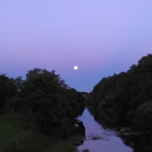 Moon over Roscommon