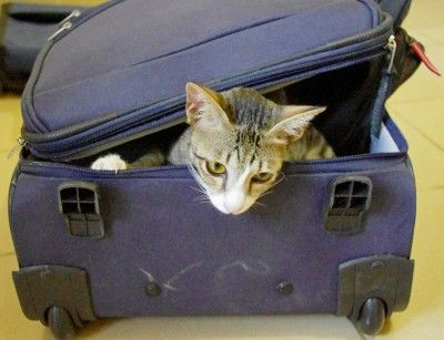 International Travel With Pets – Know the Regulations - When you are traveling internationally with your pet, the considerations you need to make before you leave cover much more than just choosing a pet friendly accommodation option.