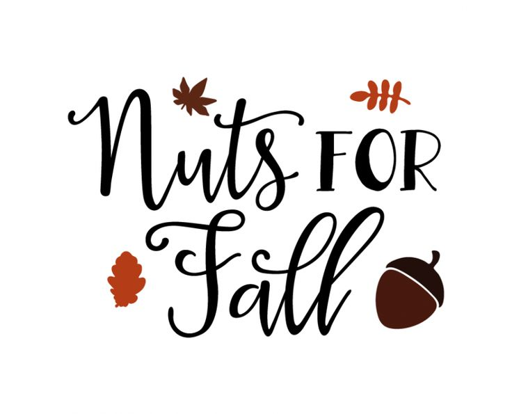 Free SVG cut file - Nuts for Fall