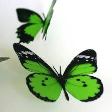Image result for lime green butterfly