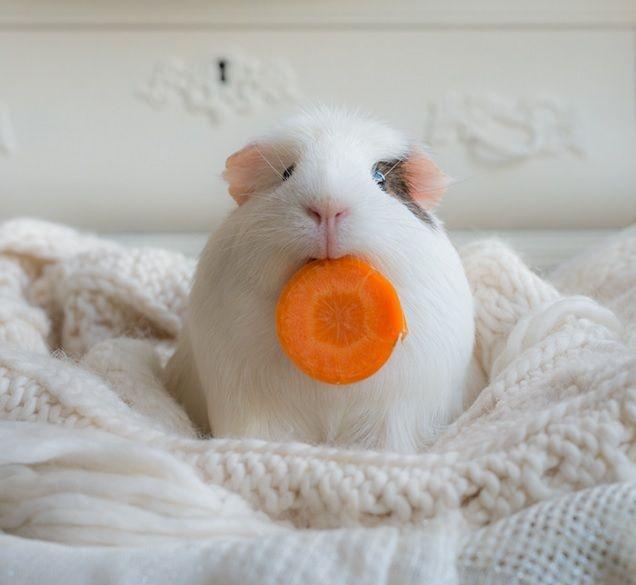"""""""Ooooooohhhh!  Carrot!!!"""