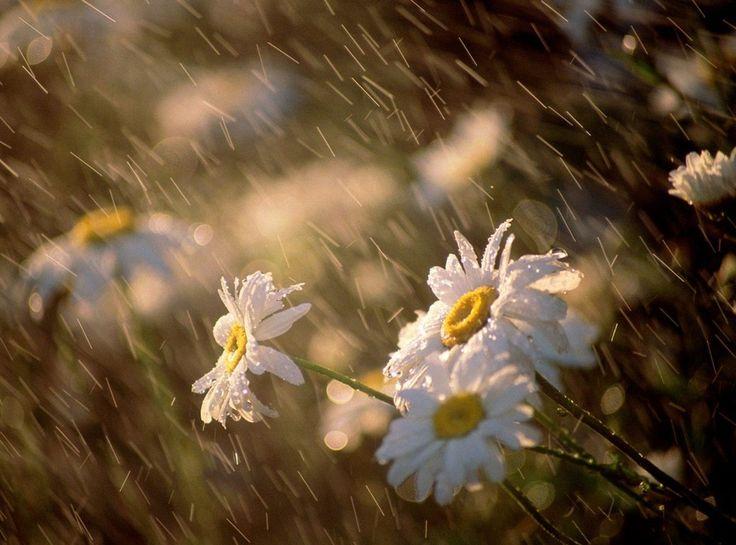 La lluvia, un regalo para las plantas.
