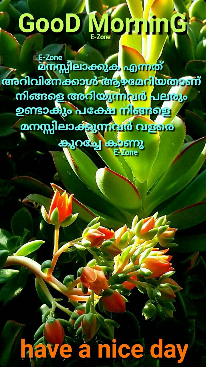 Pin By Eron On Good Morning Malayalam Good Morning Wishes Good Morning Quotes Morning Quotes