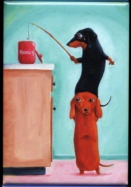 They could really do this, you know!  #dachshund #doxie