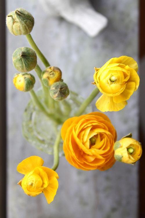yellow: Yellow Flowers, Favorite Flowers, Yellow Rose, Wedding Flowers, Flowers Power, Beautiful Flowers, Fresh Flowers, Yellow Ranunculus, Colors Inspiration