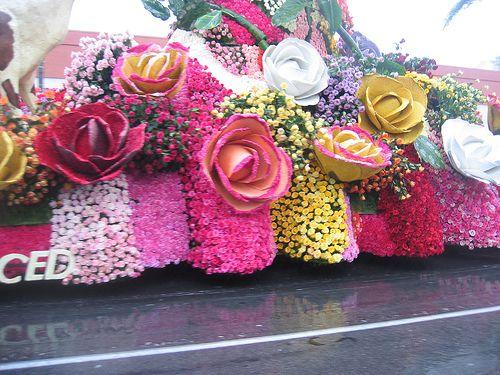 The Rose parade - Beautiful roses.