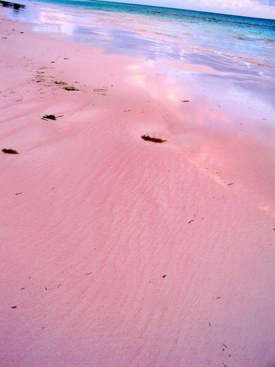 Pinterest discover and save creative ideas for Pink sands beach in harbour islands