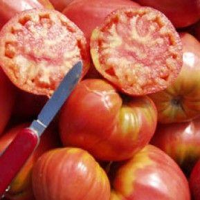 Lässt das Herz botanisch veranlagter Homecooks höher schlagen: Die Ochsenherz ist die Königin unter den Tomaten. Bio-Saatgut: Tomate Ochsenherz von Tartuffli.