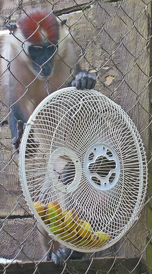 Love this DIY feeder. Up-cycled fan pieces attached together