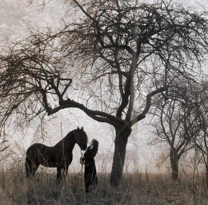 Gosia Mąkosa-equine photography, equine art, fotografia koni, sesje zdjęciowe z końmi