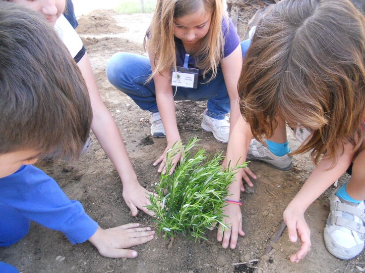 Amb motiu de la Setmana del Voluntariat Ambiental, els alumnes de l'escola El Temple (Tortosa) planten aromàtiques al seu jardí
