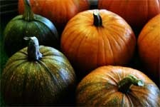 how to turn green pumpkins orange after the vine dies (early)