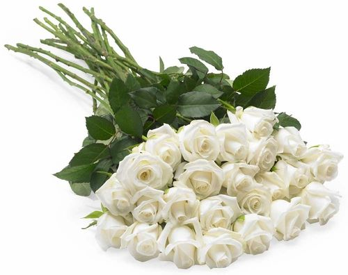 Image result for white roses pictures