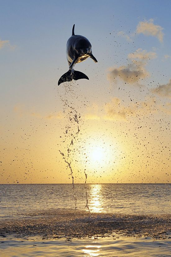 Look how high this dolphin is jumping. Its impossible that he sucks.