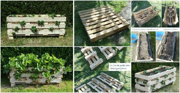 Learn How To Make Strawberry Planters with Pallets