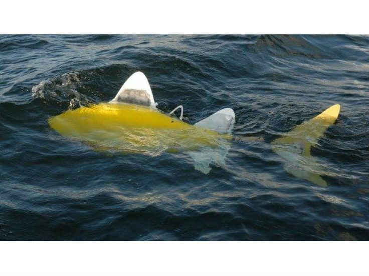 Robo-fish uses arti-fish-ial intelligence to find pollution