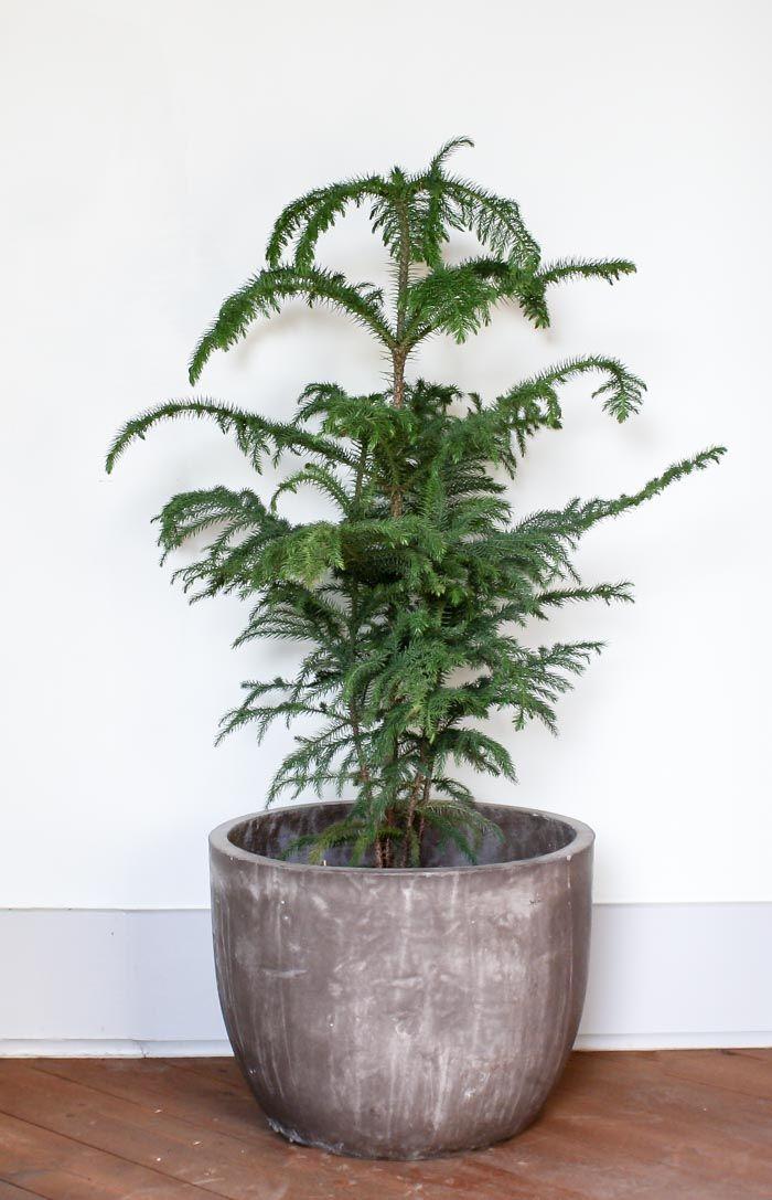 Best 25+ Large indoor plants ideas on Pinterest | Indoor green ...
