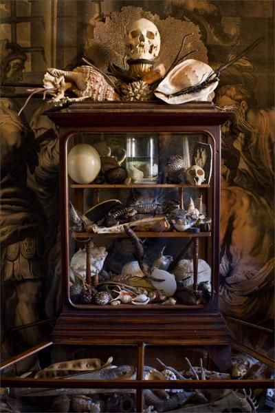 1874 Best Cabinet Of Curiosities Images On Pinterest