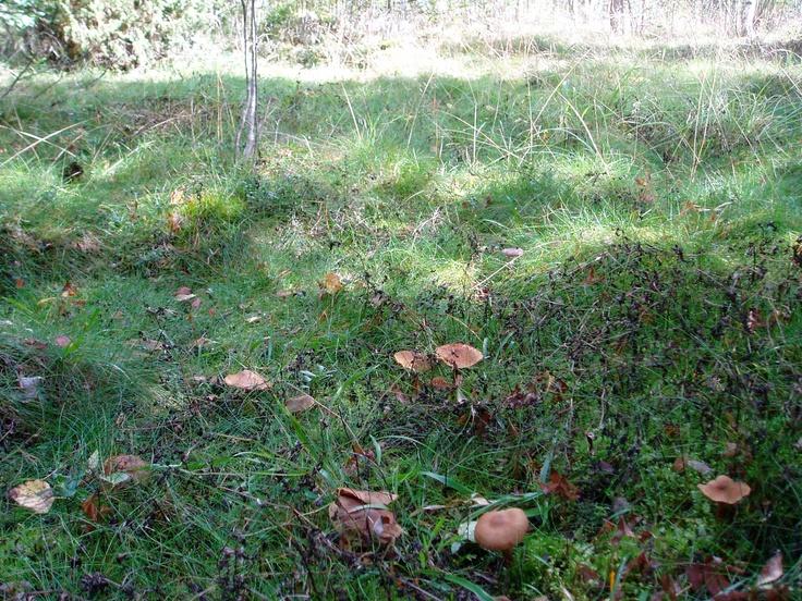 Some more mushrooms