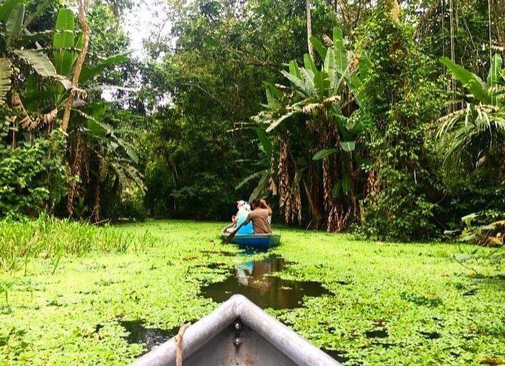 Row row row your boat.  Merrily rowing through Cahuita mangroves via @rayan_ezzeddine!