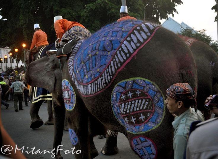 Gajah Keraton Jogja