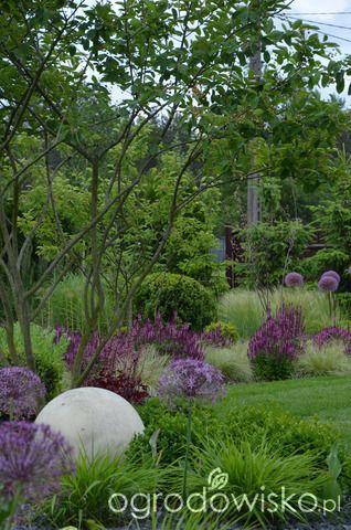 """Jak """"ożywić"""" mój szmaragdowy ogród - strona 1759 - Forum ogrodnicze - Ogrodowisko"""