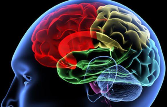 Tumore al cervello: scoperto il meccanismo di crescita - http://www.wdonna.it/tumore-cervello-scoperto-meccanismo-crescita/69160?utm_source=PN&utm_medium=WDonna.it&utm_campaign=69160