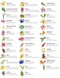 les fleurs de bachs