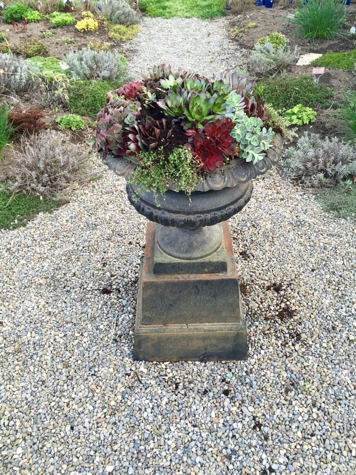 Made with help from Garden expert Elaine Martin of From the Potting Shed