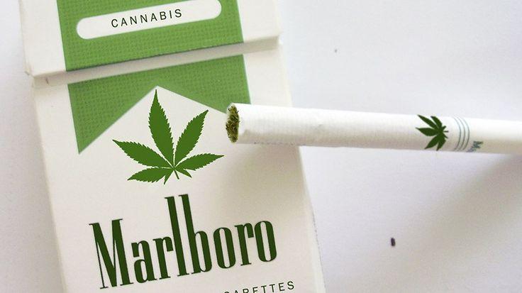 Gigante do tabaco mira em mercado da maconha medicinal