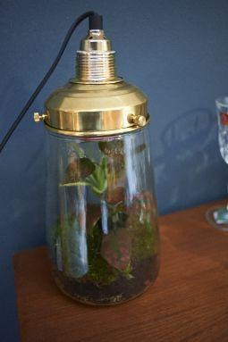 DIY  Nature Lamps #TMOtrendevent