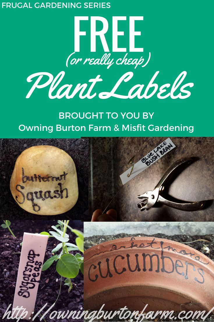 How to Make Plant Labels for FREE (or Really Cheap)! - Owning Burton Farm