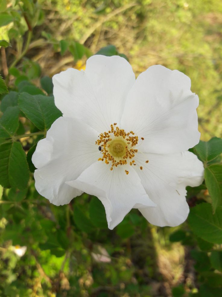 https://flic.kr/p/TfKa1F | Spring Flower