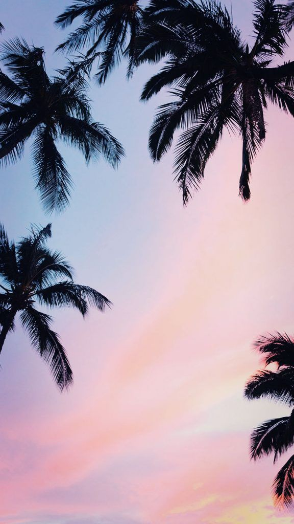 Iphone Trees Sky Palm Tree Ios Https Weheartit Com Entry 324203705 Sunset Iphone Wallpaper Palm Trees Wallpaper Preppy Wallpaper