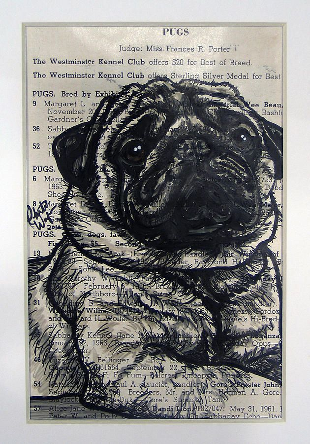 Pug Painting                                                                                                                                                      More