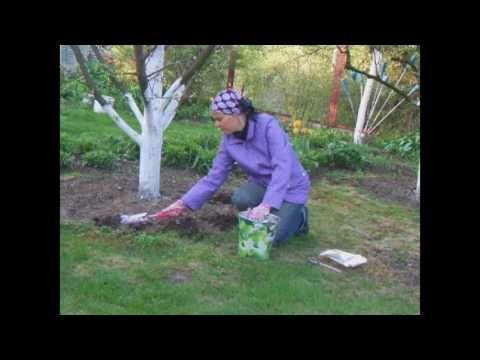"""Подкармливаем плодовые деревья по методу """"шведского стола"""" - YouTube"""
