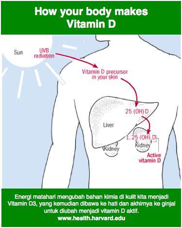 Tahukah anda Vitamin D2 dan D3 berbeda..... #Vitamin D3 adalah yang kita hasilkan karena #tubuh terkena #SINAR #MATAHARI ..........  #Vitamin D2 adalah yang kabanyakan dihasilkan dari tanaman dan dikemas menjadi #supplement ........  #@GREEN SHOP (Pusat Produk Perawatan Kulit Organik di Indonesia) ...... http://www.health.harvard.edu/newsweek/vitamin-d-and-your-health.htm