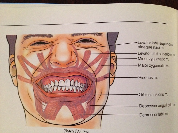 Muscles of mouth and lip