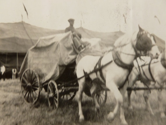 Vintage circus photo by PBLVintageandMore on Etsy, $3.00