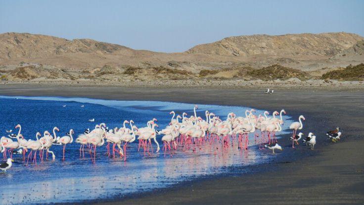 Flamingos #Namibia Lüderitz