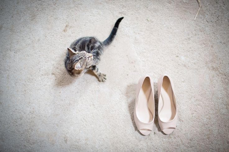 nude shoes + a cat