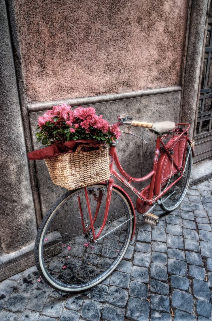 flowers on the bicycle - HDR Photo
