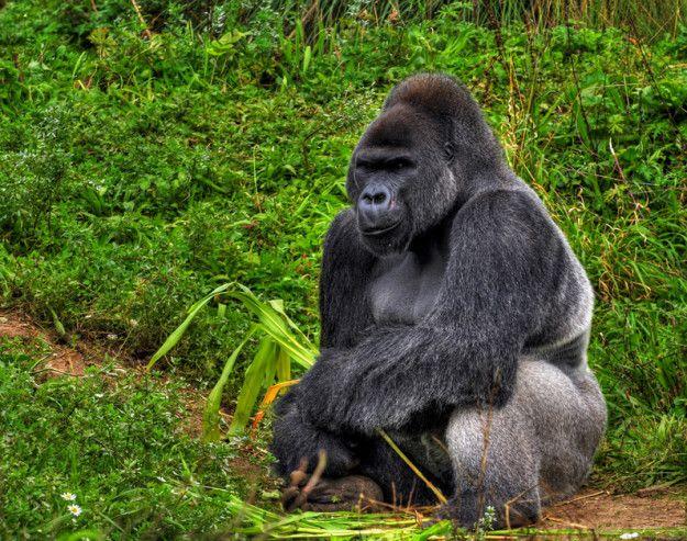 42 Best Images About Republica Democratica Del Congo