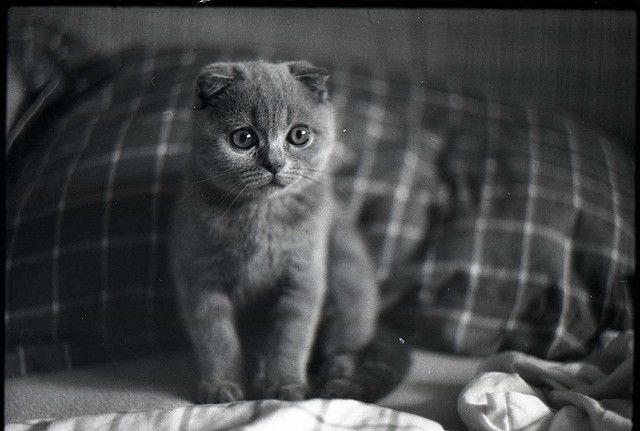 One day, I will have this kitty and his name will be Clyde.