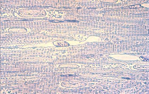 08916040.jpg 500×315 pixels