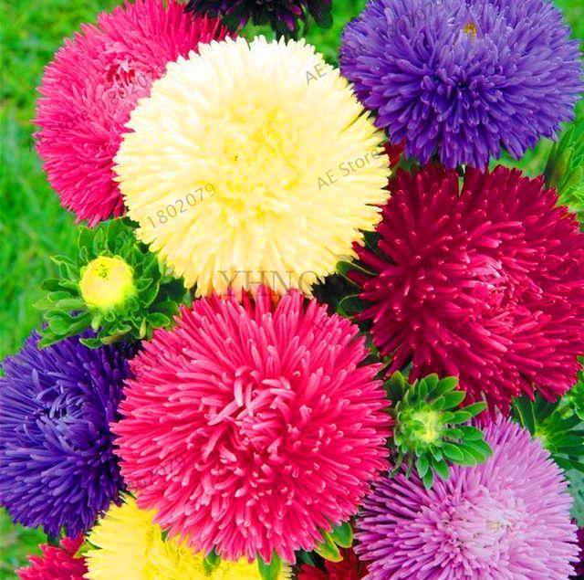 Pin On Dzialka Kwiaty 7 Happyfarm Store