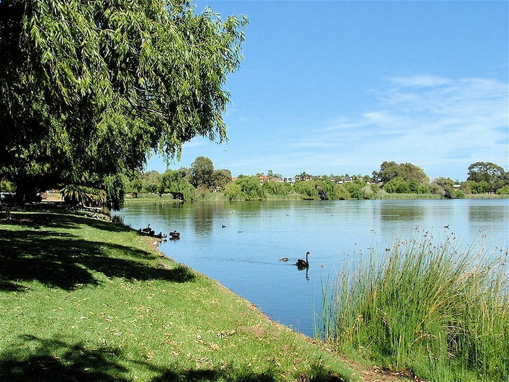 Lake Monger, West Leederville, Perth, Western Australia. A five minute walk from Central's Leederville campus