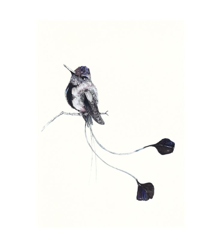 Spatuletail hummingbird illustration print on A3, 250gr paper. Signed. You can buy this piece here: www.artrebels.com #artrebels #blackandwhite #art
