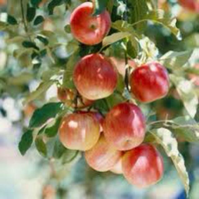 182 mejores im genes sobre jardin fruta verdura en - Semillas de frutas y verduras ...